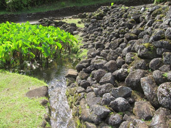 Limahuli Garden and Preserve: Loi traditional taro patches.