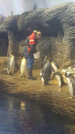Antwerp Zoo (Dierentuin): 20160711_150807_large.jpg