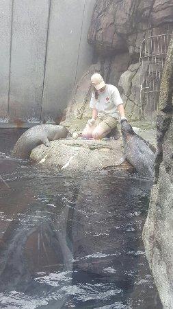 Antwerp Zoo (Dierentuin): 20160711_150403_large.jpg