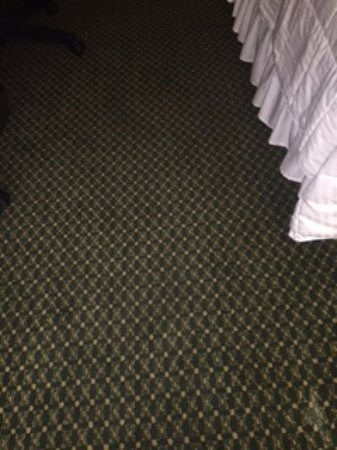 Odessa, TX: Dirty and stained carpets