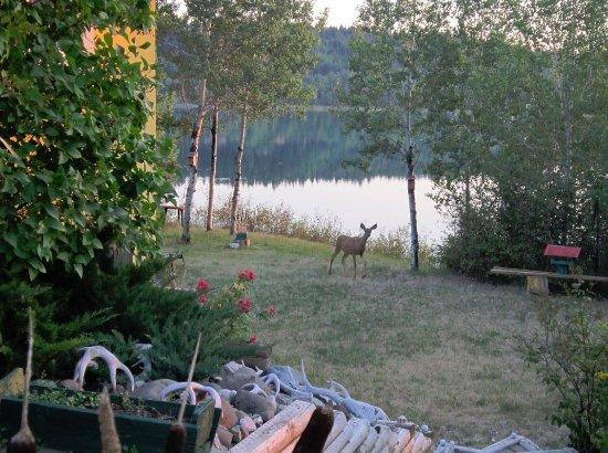 108 Mile Ranch, แคนาดา: Backyard visitors at Arcona House