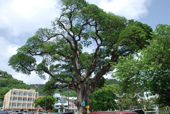 Derek Walcott Square: One of the highlights of the square