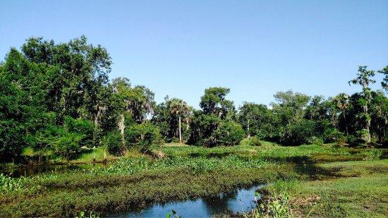 Arcadia, Флорида: photo3.jpg