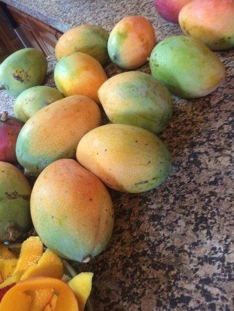 The Inn at Twin Palms: Fresh homemade mango jam, cinnamon rolls, karaoke night are just a few treats at Twin Palms.