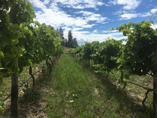 West Kelowna, Canada: Rollingdale Winery