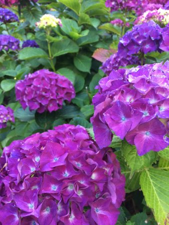 Belle Vue Bed and Breakfast: Beautifully groomed grounds with colourful flowers everywhere!
