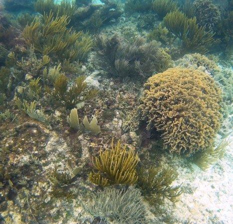 Tulum Underwater: Haciendo snorkel en los arrecifes de Tulum