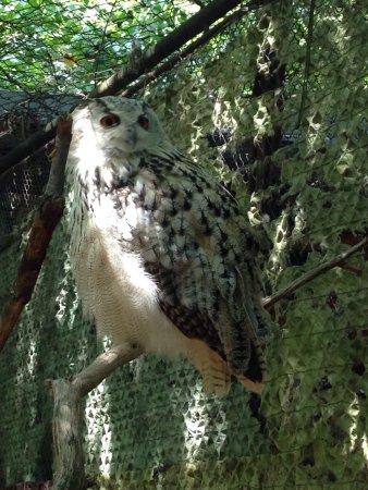 Brno, Republika Czeska: Prachtige dierentuin zonder de big 5 maar wel giraffen