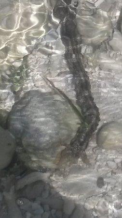 Fijian Sea Worm Lots Of These At Namuka Beach Picture Of Namuka