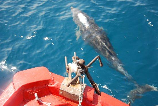 Lidija Tours: Um Delfine zu sehen braucht man viel Glück? Naja, hier reicht eine viertel Stunde auf dem Boot!