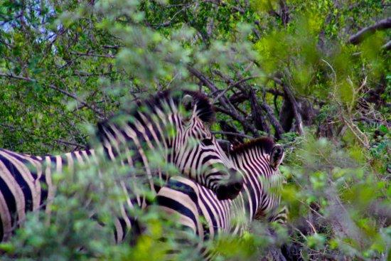 Bilde fra Naledi Bushcamp and Enkoveni Camp