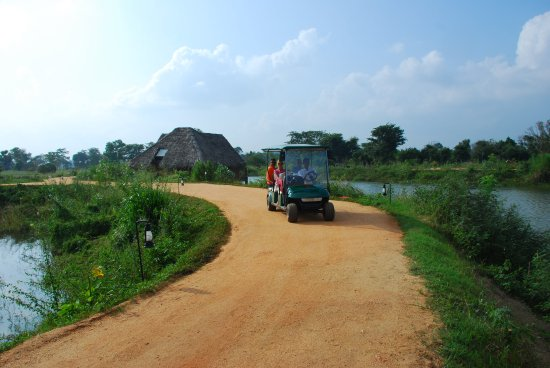 Jetwing Vil Uyana: Buggy travel
