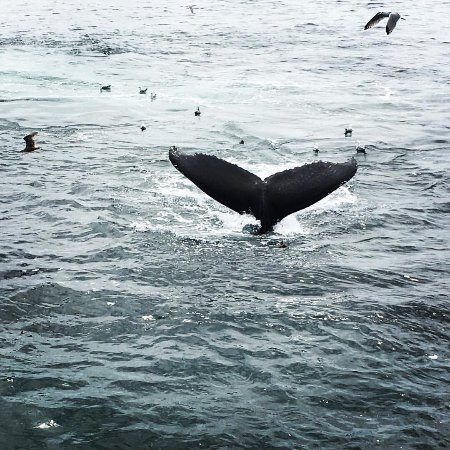 Barnstable, MA: Hyannis Whale Watcher Cruises