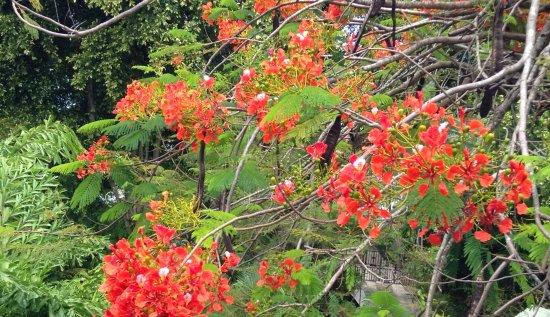 Lotus Chi Garden Guest House Reviews St Lucia Castries