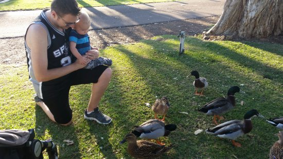 Mannering Park, Australia: Ducks right outside the door
