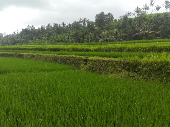 写真Kubu Lalang枚