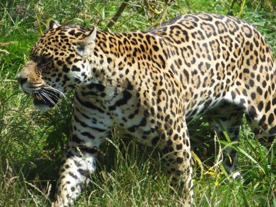 South Lakes Safari Zoo: Safari Zoo