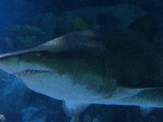 Istanbul Sea Life Aquarium Very Nice Place To Visit Not Expensive And The Is A