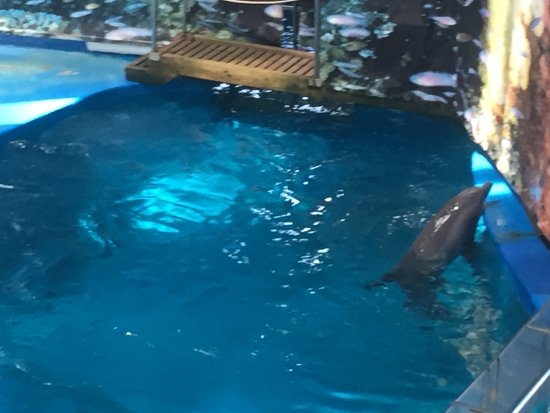 Dolphin Trying To Escape Its Tiny Enclosure Picture Of Barcelona