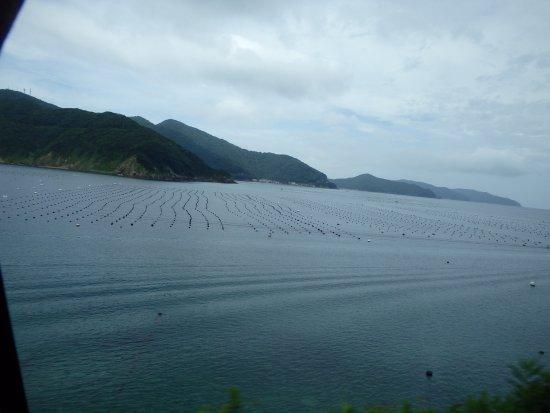 Hotel Sun Pearl: ホテル近くの海では愛媛真珠の養殖がされていた