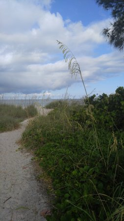 On the Beach- Casey Key : The walk through the sand dunes to get to the beach