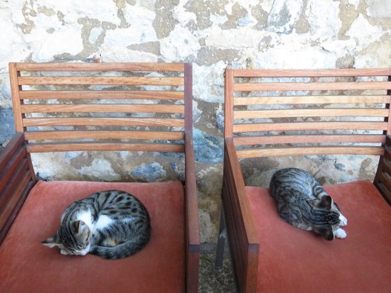 Villa Kerasia: The cats of the house