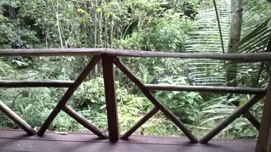 Lupa Masa Rainforest Camp: The view from our chalet