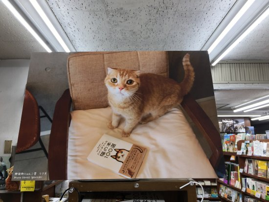 Kanda Jimbocho Bookstore Area: photo9.jpg