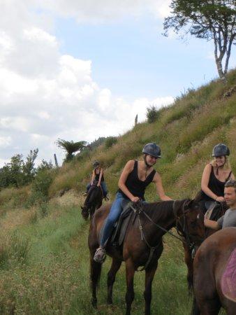 Owhango, Yeni Zelanda: horses