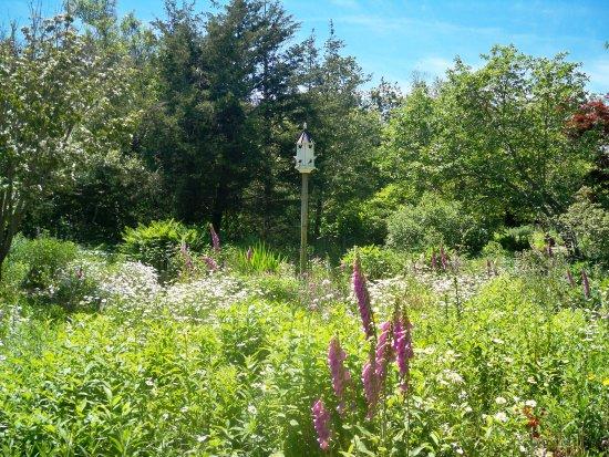 East Sandwich, MA: Wildflower Garden - 1