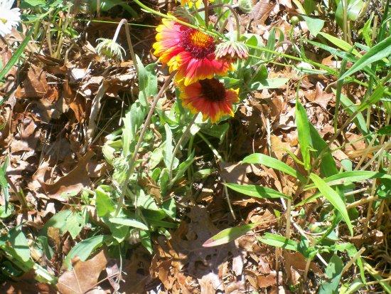 East Sandwich, MA: Wildflower Garden - 2