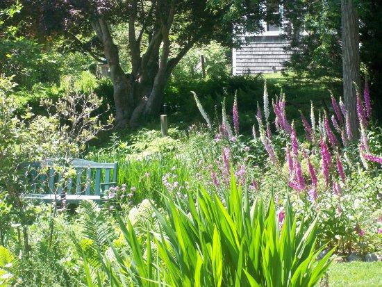 East Sandwich, MA: Wildflower Garden - 3