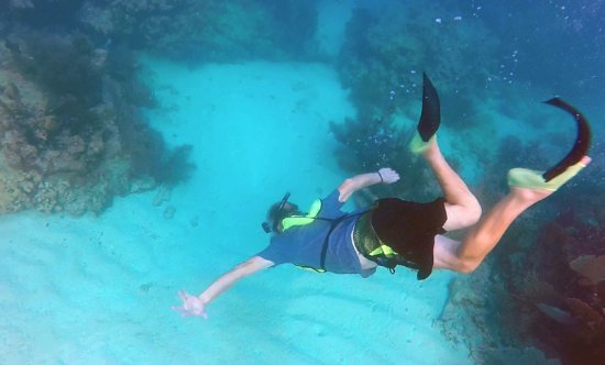 Starfish Snorkeling At Sombrero Reef Marathon Fl
