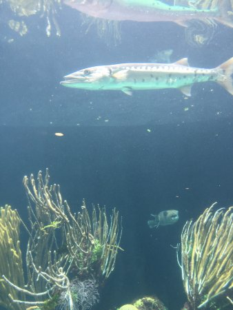 Hamilton, Islas Bermudas: Bermuda Aquarium, Natural History Museum & Zoo