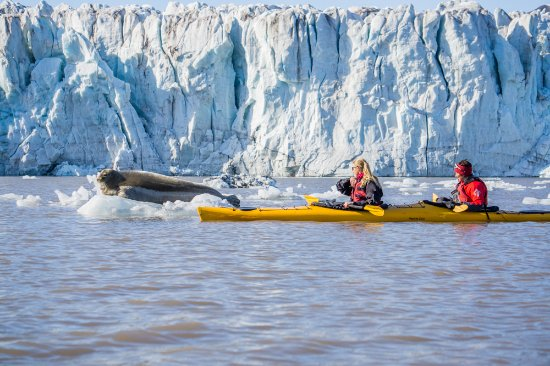 Longyearbyen, Noruega: kayaking in front of the glacier visiting a bearded seal