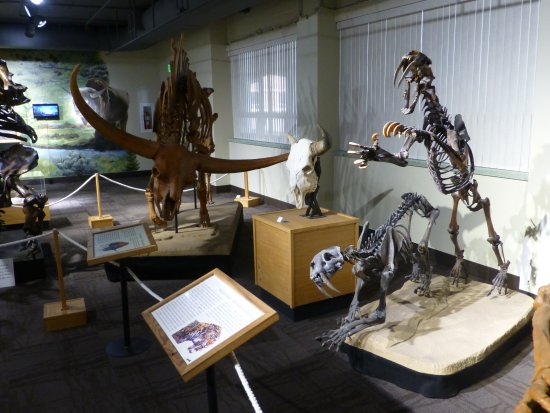 Idaho Museum of Natural History: Skeletons from animals that roamed the Idaho area.