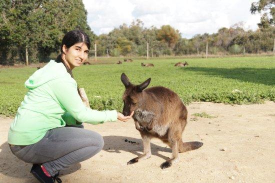 Seddon, Australia: Känguru