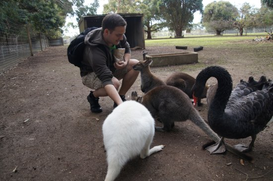 Seddon, Australia: Wallabies
