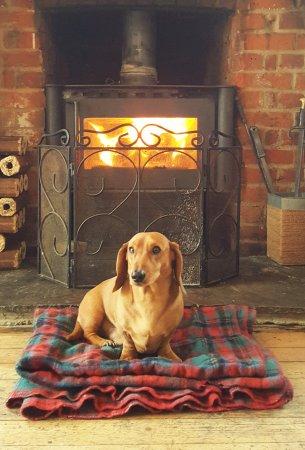 Chipping Ongar, UK: Finn the pubs dog!