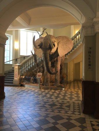 Naturhistorisches Museum (Luonnontieteellinen Museo): photo7.jpg
