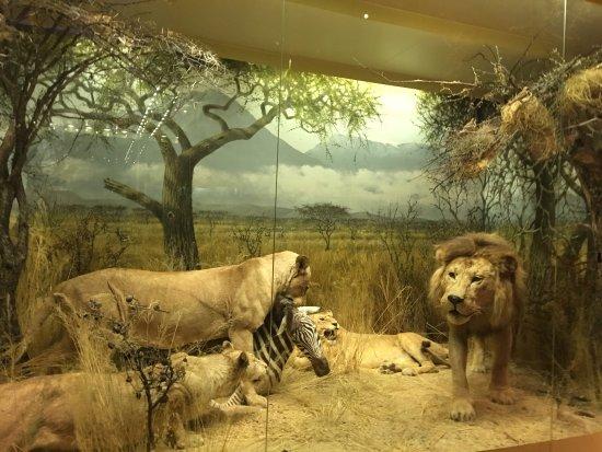 Naturhistorisches Museum (Luonnontieteellinen Museo): photo8.jpg