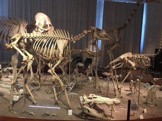 Naturhistorisches Museum (Luonnontieteellinen Museo): photo9.jpg