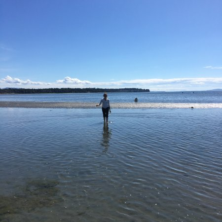 Blaine, Вашингтон: Low tide on the bay - you can walk out so far!