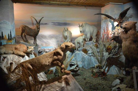 Фельд-ам-Зее, Австрия: Africký svět