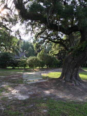 Mansfield Plantation: Swinging hammock