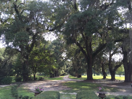 Mansfield Plantation: View from the main house down the driveway