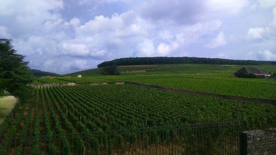 Aloxe-Corton, Fransa: DSC_0424_large.jpg