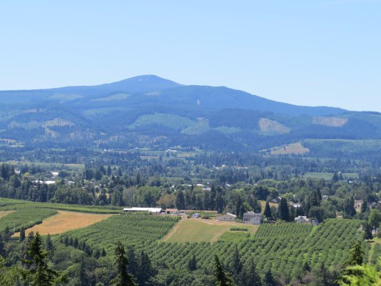Hood River, Όρεγκον: View of the fruit trees