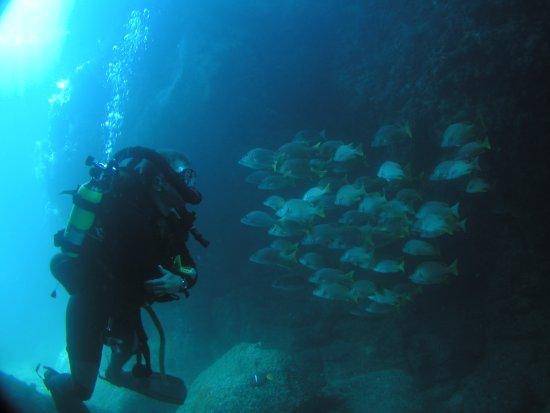 Baja Diving & Service