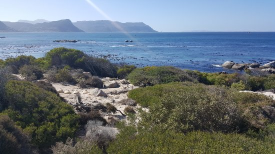 Cape Splendour Day Tours: View from Boulders Beach